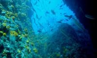 diving-punta-de-la-mona_large.jpg